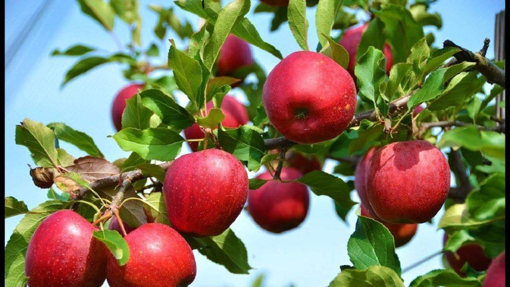 impressive of apple benefits